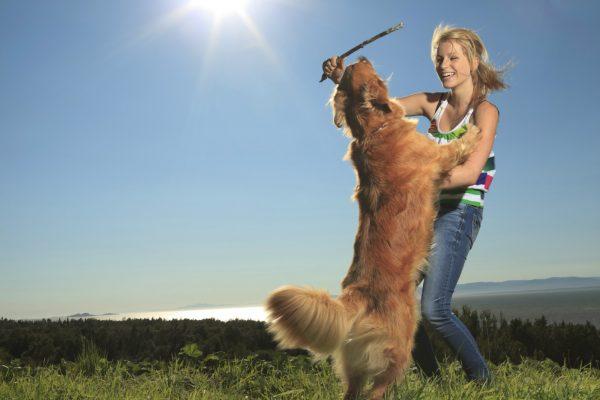 美国宠物护理平台 Rover 再融资 6500万美元