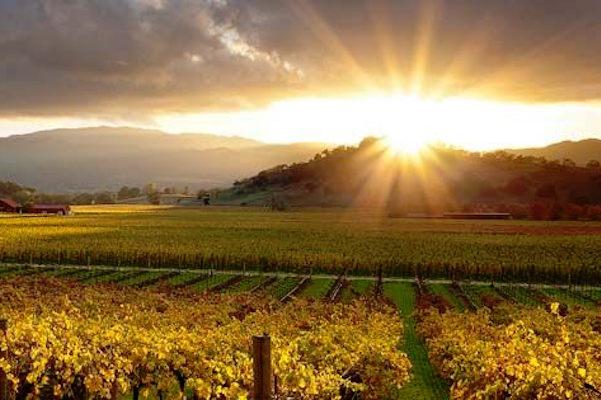 美国加州两大葡萄酒之乡风水轮流转:Napa 人满为患,Sonoma 后来居上