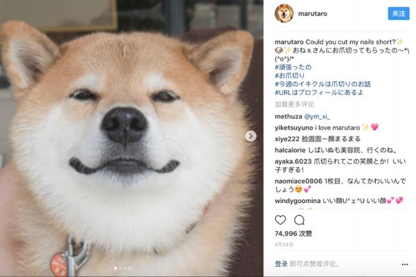 """日本十大最具影响力的""""平民"""" Instagram 账号,冠军是一只名叫 Marutaro 的柴犬"""