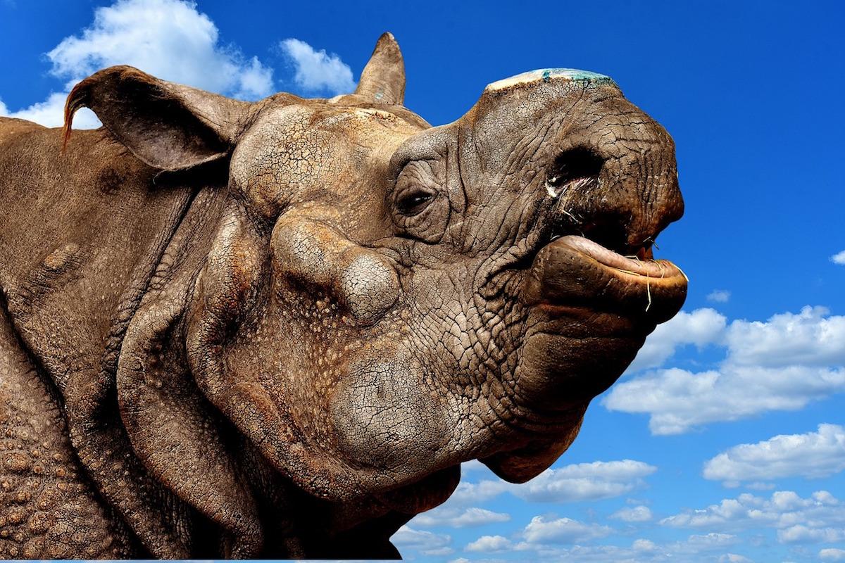 动物保护组织 TRAFFIC 最新报告:犀牛角走私开始流向亚洲高端饰品市场
