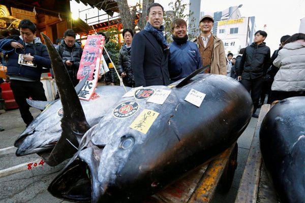 日本筑地市场最后一次新年拍卖会,一条蓝鳍金枪鱼成交价达209万人民币
