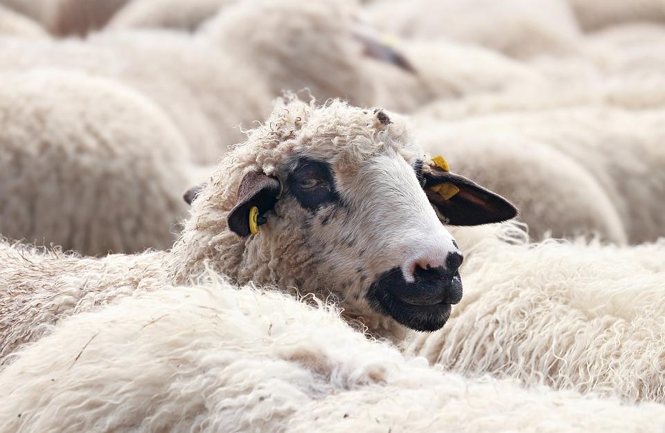 羊毛在运动鞋上的应用越来越广泛,去年羊毛价格上涨30%