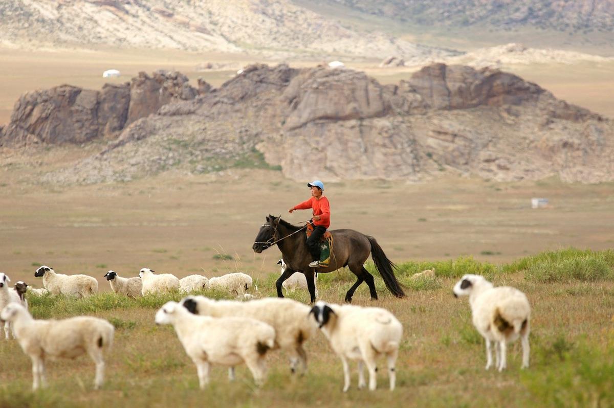 为方便羊绒跨境交易,蒙古商品交易所联手中国渤海商品交易所推出全球线上采购平台