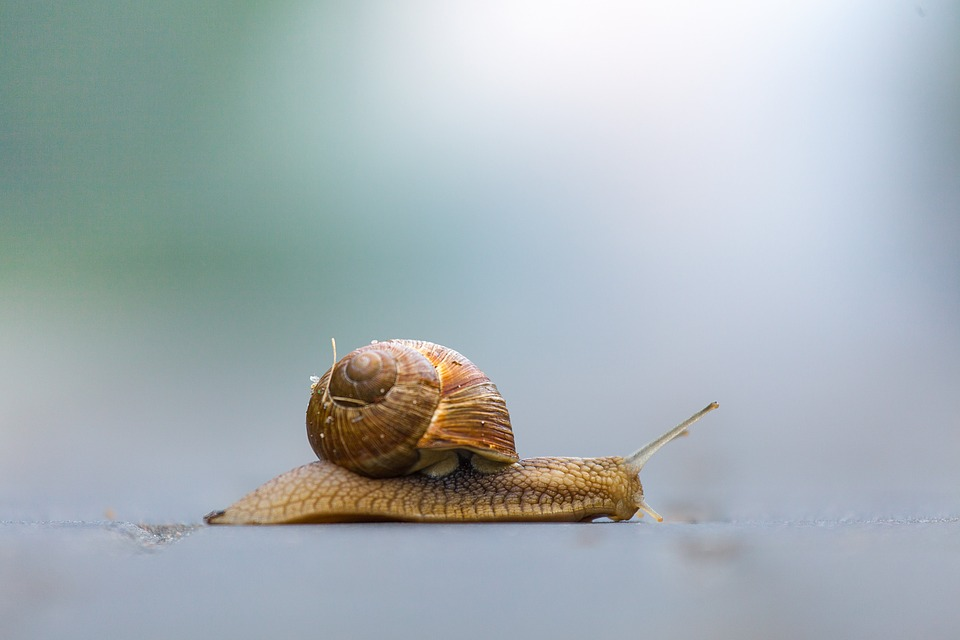 """韩妆潮流催热泰国蜗牛养殖业:为产出高品质""""黏液"""",蜗牛享受""""贵宾级""""待遇"""