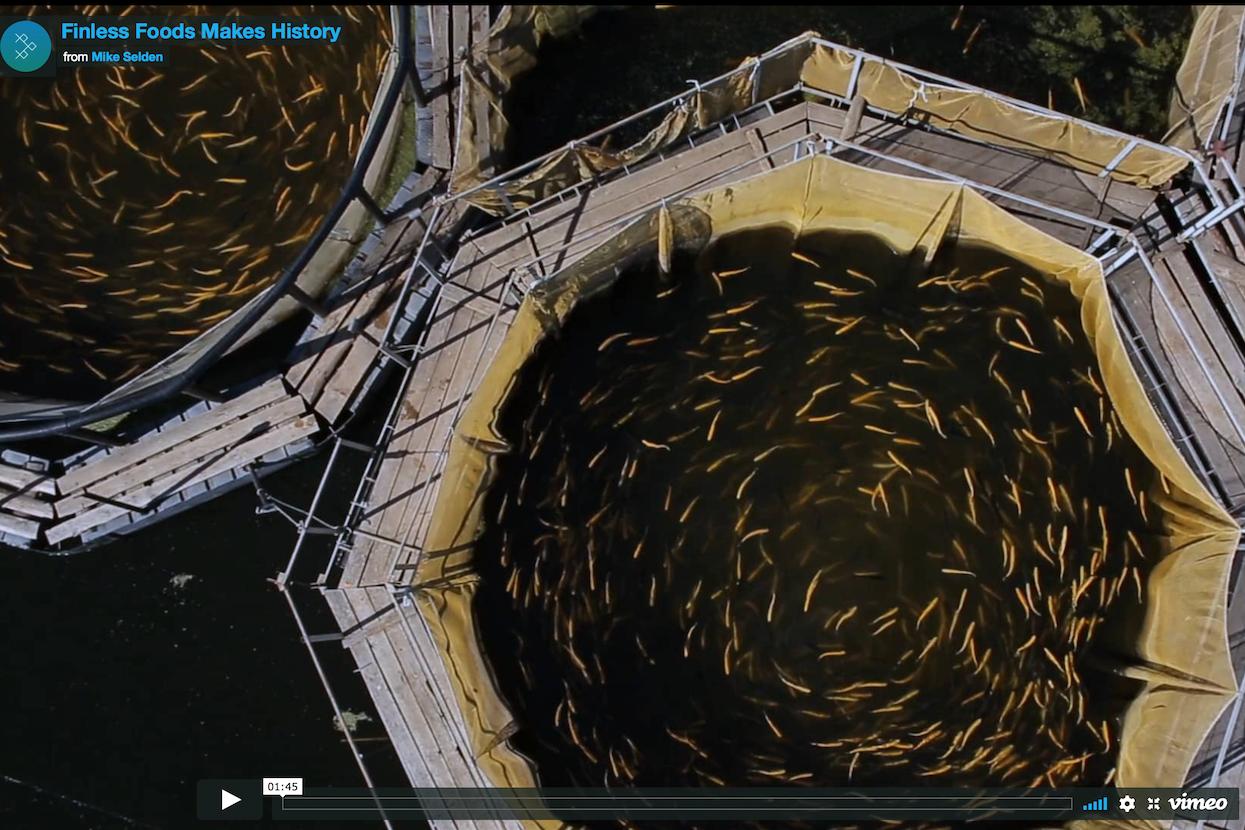在实验室里培育海鲜!美国环保海鲜初创公司 Finless Foods 完成350万美元融资