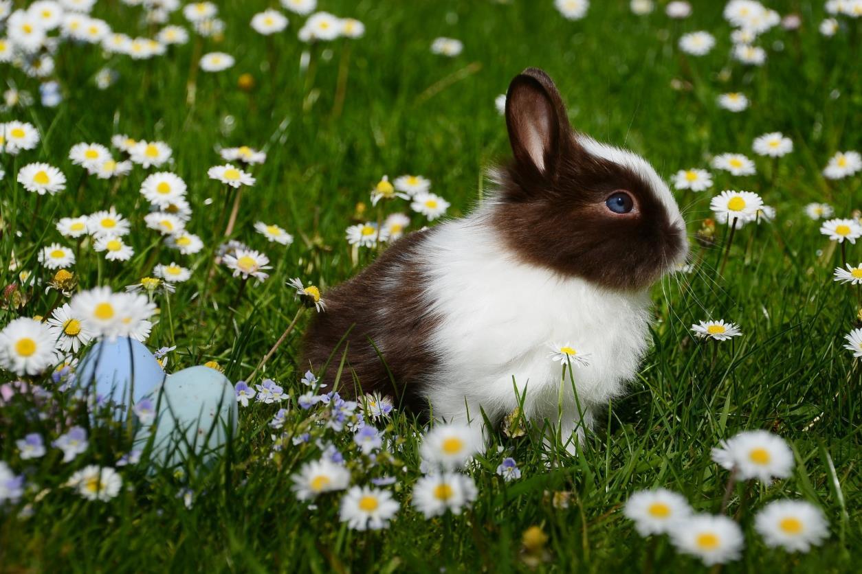 中国对动物测试的政策不断调整,逐渐放宽对美妆产品相关限制