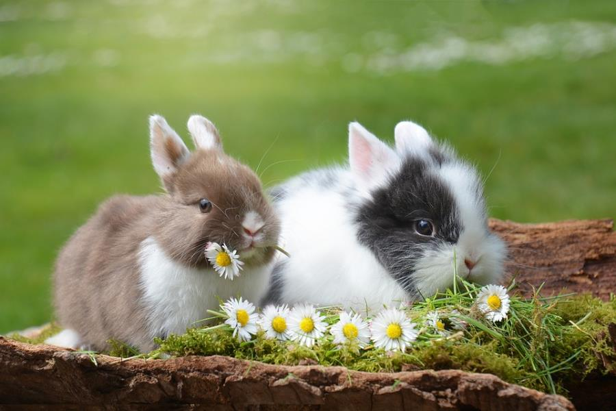 雅诗兰黛集团力挺 #BeCrueltyFree 活动,希望在 2023年以前废除化妆品动物测试