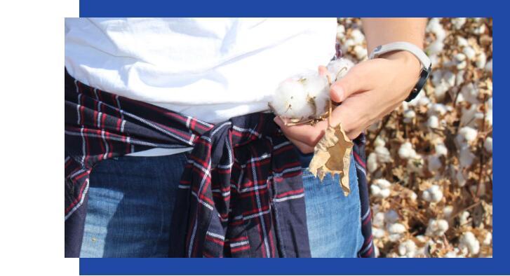 Gap集团宣布,到2025年所有棉花都将从可持续来源采购