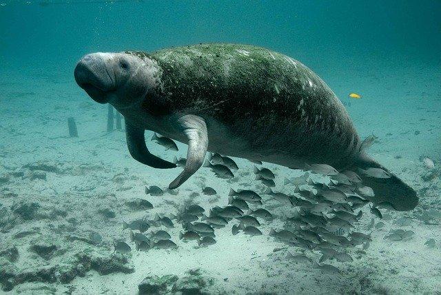 从泰国海岛到威尼斯水城,游客骤减让海水更清、鱼儿更欢