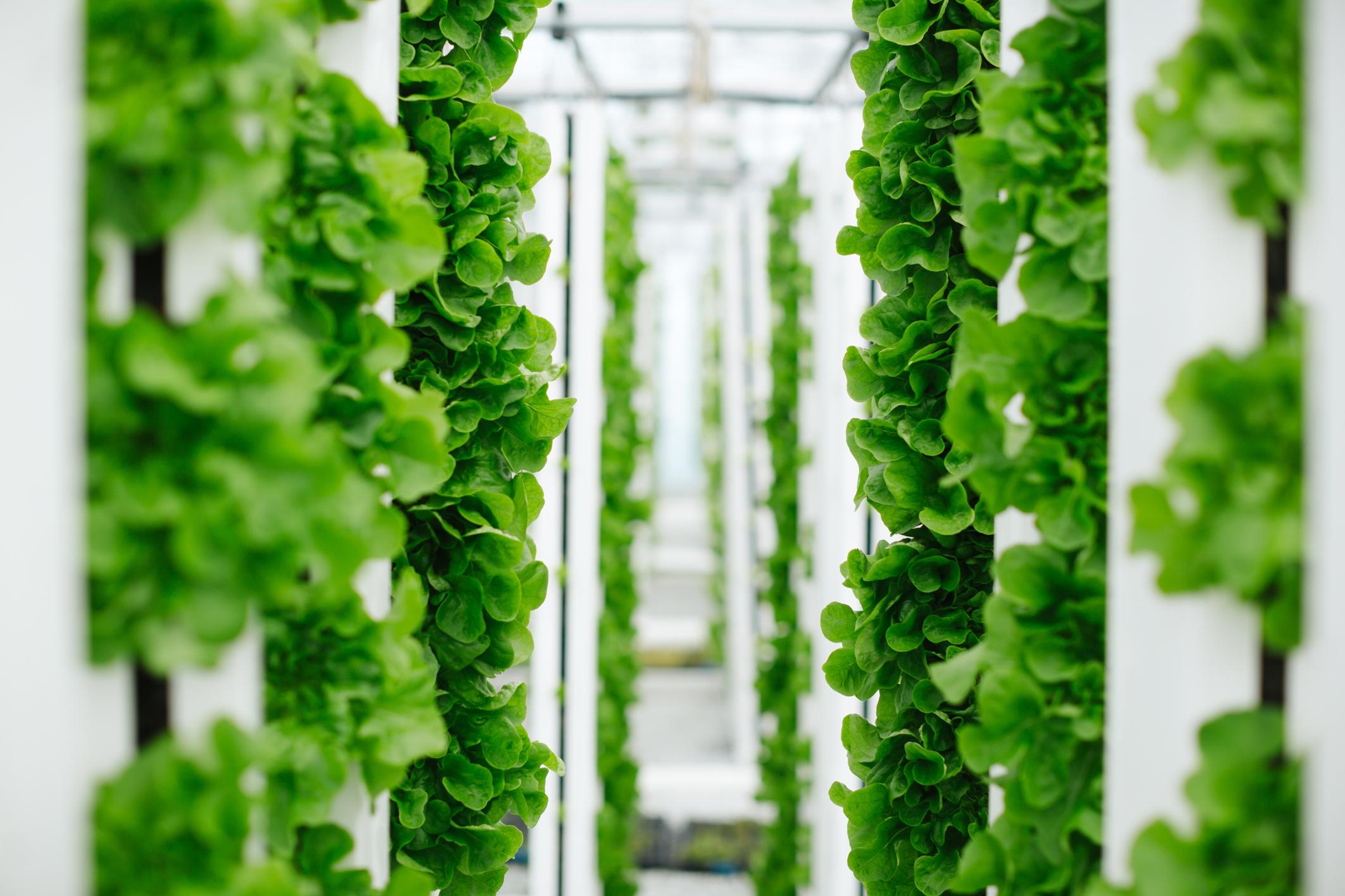 新加坡淡马锡与德国拜耳成立合资公司,开发垂直农业作物新品种