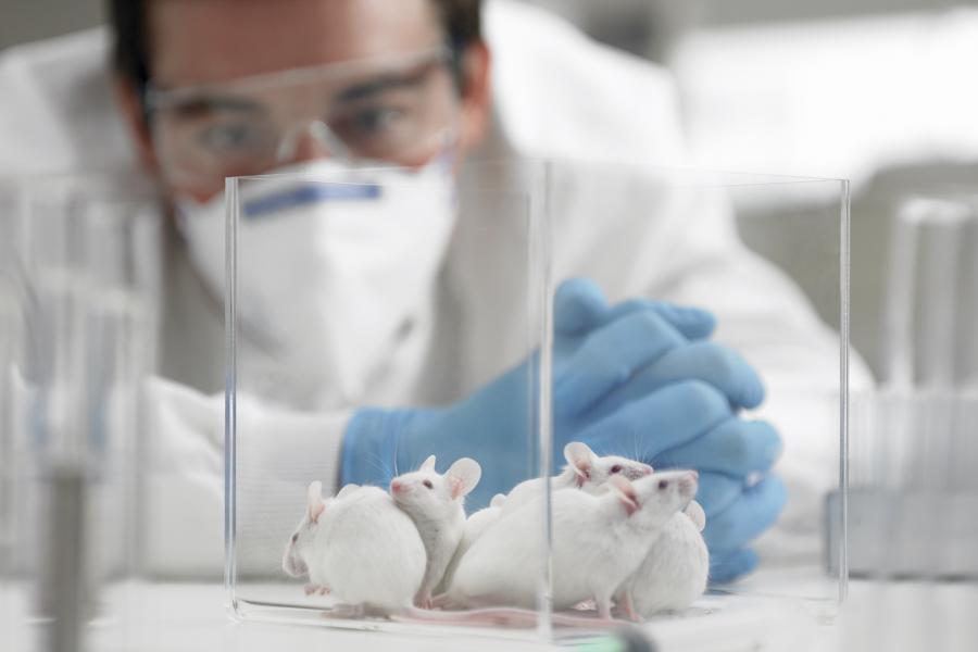 """5月1日起,中国将对""""进口普通化妆品""""免除动物测试"""