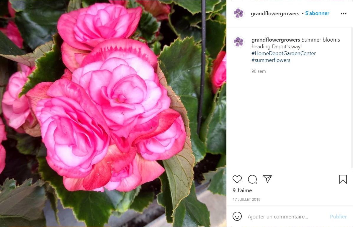美国花卉供应商 Grand Flower Growers 获2060万美元少数股权投资